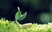 Vækst, Systemisk Opstilling og Penge Opstilling.